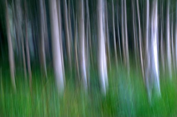 Forest Art 2*