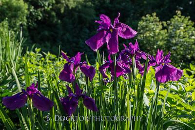 Spencertown Academy Hidden Gardens 2015-5