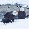 Chilkat Eagles 5DMKIII-20171202-0825-Edit