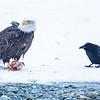 Chilkat Eagles 5DMKIII-20171202-0204-Edit