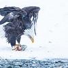 Chilkat Eagles 5DMKIII-20171202-0207-Edit