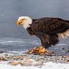 Chilkat Eagles 5DMKIII-20171203-0247-Edit