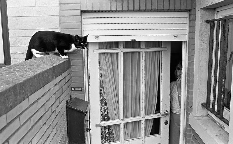 Le Chat Perché