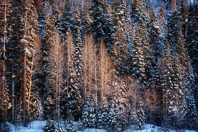Snowy Forest  ©Karen Hutton - Creative Commons (CC BY-NC 3.0)