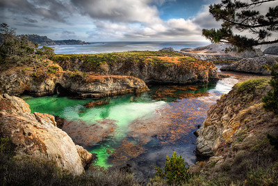 Point Lobos After All These YearsPoint Lobos, California  After a lifetime of admiring Point Lobos through masterful, black and white Edward Weston photographs... imagine my delight at its vividness of colordom! No, really - imagine it. hehheh.
