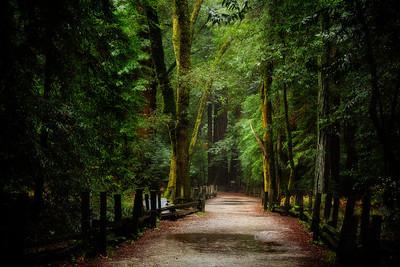 QuietudeFelton, California  Shhhhhh. The forest is thinking.