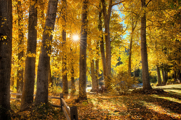 In the Grove of Spun GoldTruckee, CA  There is a place where visions are brighter, ideas are better, the light is gentler and the spun gold that permeates the air makes you a better person.   It looks a bit like this.