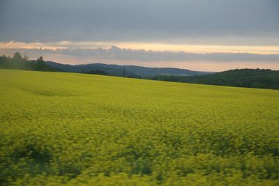Fields of barley, Czech Republic