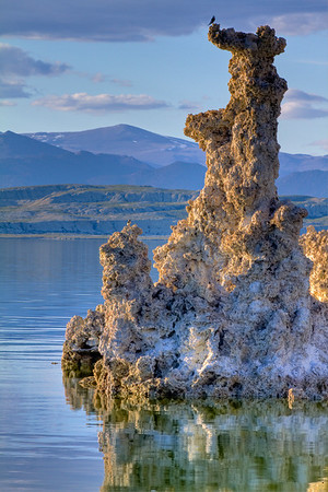 Birds enjoying an early morning glow on mono lake