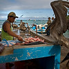 Fish Market, Santa Cruz, Galapagos Islands