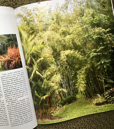 Garden Design magazine on the Big Island of Hawaii; stands of bamboo at Hale Mohalu_8028