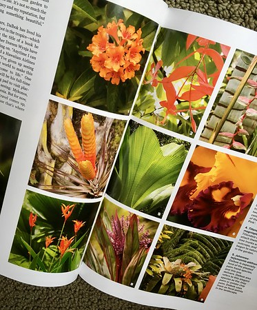 Garden Design magazine story on Hale Mohalu tropical plant material of ti, heleconia, palms, vireya among numerous bromeliad