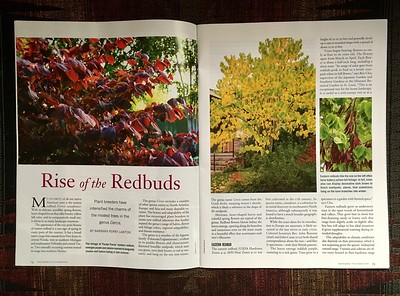 The American Gardener did a lovely spread using my images for an article called The Rise of Redbuds