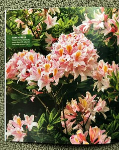 Garden Gate BLOOMS special edition May 2015 interior page of Azalea 'Dawn's Choice'