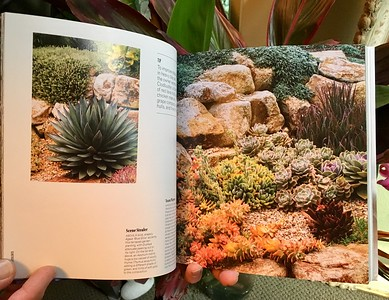 Succulents by Robin Stockwell; 2 shot spread & story of a succulent garden in the Oakland Hills