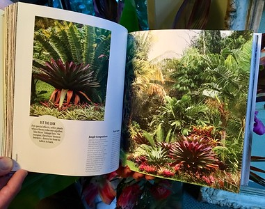 Succulents by Robin Stockwell;  spread & continued story of Hale Mohalu a tropical wonderland in Pahoa Hawaii