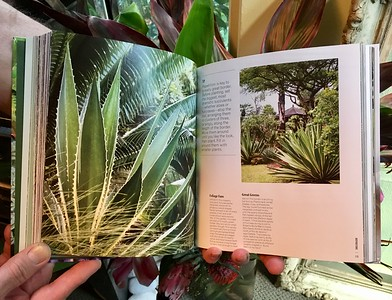 Succulents by Robin Stockwell; 4 shot spread & story of a succulent garden in Hawaii on the Big Island