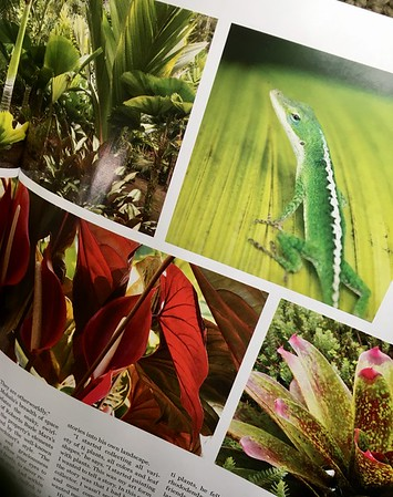 Garden Design magazine, tropical lizard at Hale Mohalu and other garden textures