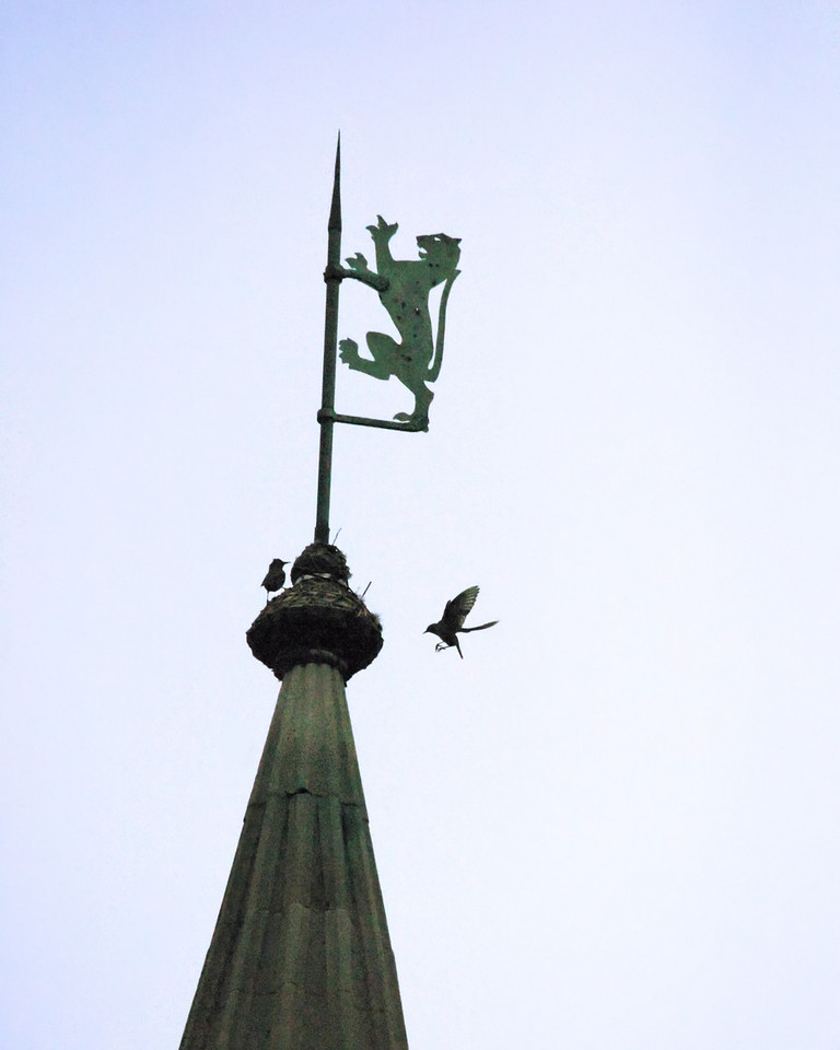 Birds on spires over Princeton University campus.