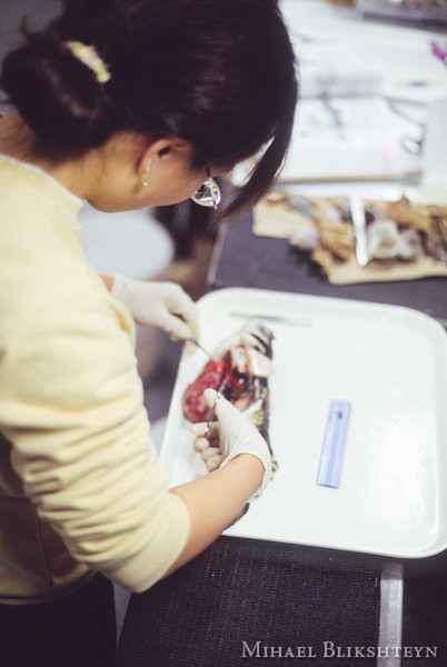 Woman scientist dessecting a fish