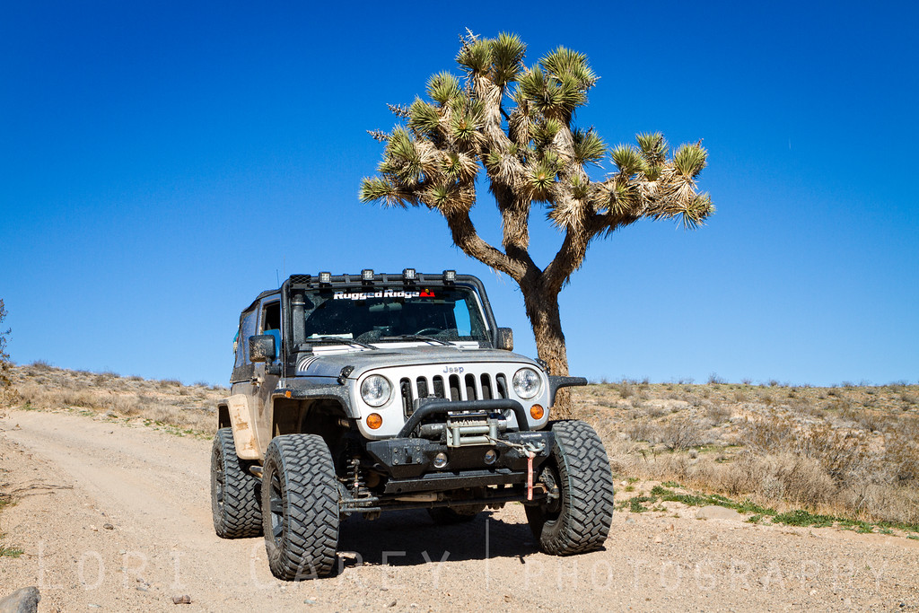 Jeep and Joshua Tree, Mojave desert, California
