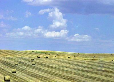 Wyoming Tootsie Rolls