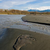 New beach at Elwha delta, March 25, 2013.