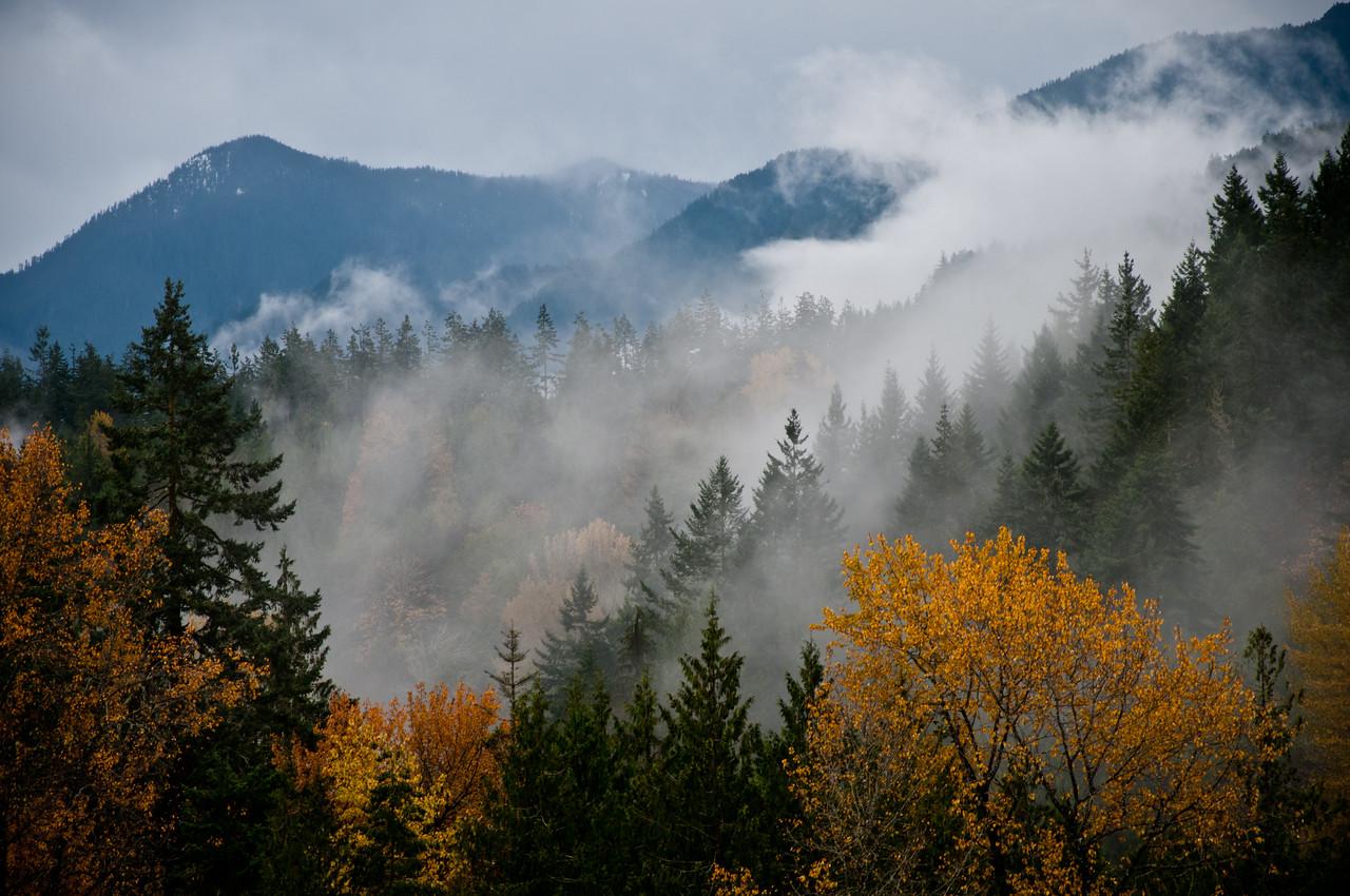Elwha River Valley, Olympic National Park, Washington.