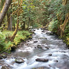 Lillian River, Elwha Watershed, Olympic National Park, Washington.