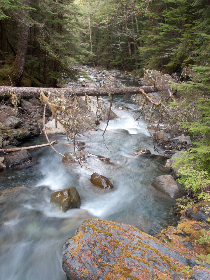 Tributary, upper Elwha River valley.