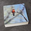 VermillionFlycatcher.6x6.Photo/Encaustic/Panel