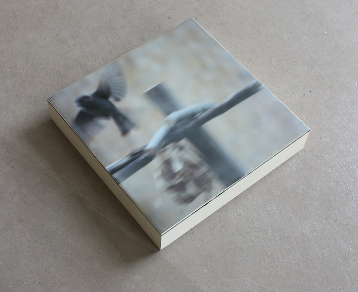 Sparrow.8x8. Photo/Encaustic/Wood Panel