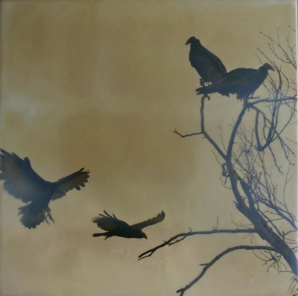 Turkey Vultures 8x8 Photo with Encaustic on panel SOLD