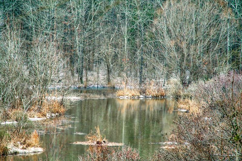 Snowy Woods along Reflection Creek