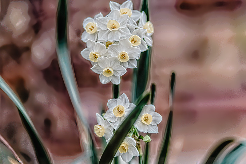Paperwhite Daffodils Bouquet