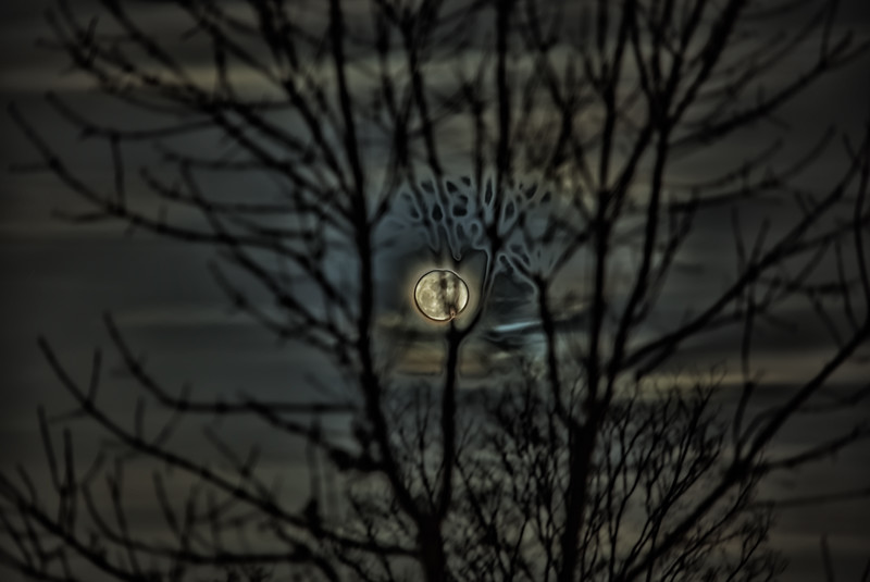 The Christmas Moon Stuck in a Tree