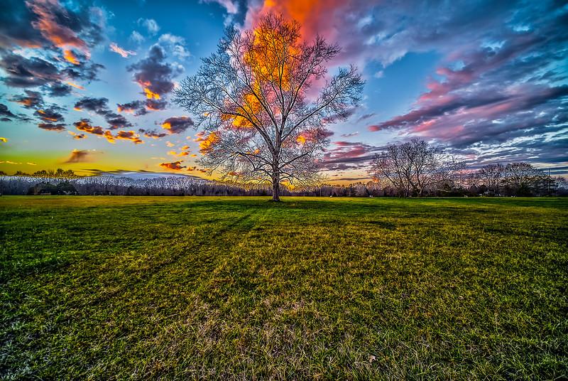 Country Pecan Tree Sunset