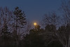 Supermoon Rises above the Trees