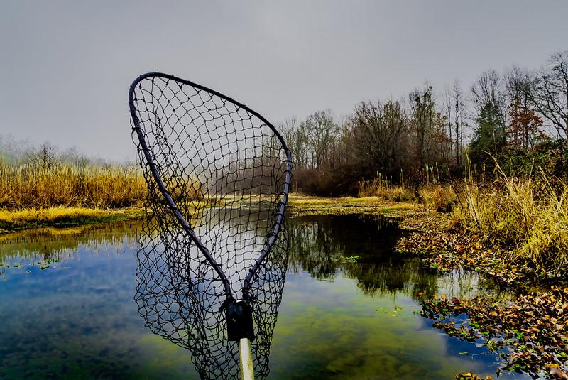 Netting a Reflection