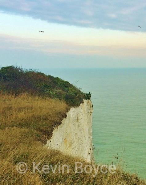 Birds of the White Cliffs