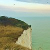 Birds of the White Cliffs