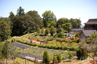 Red Ridge Farm Lavender Fields_108