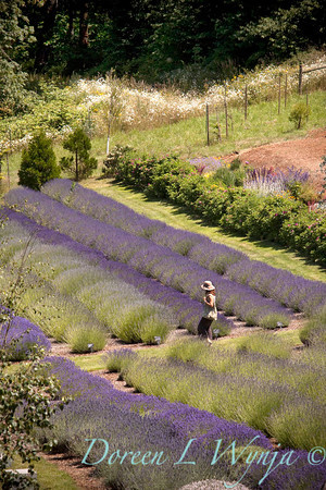 Red Ridge Farm Lavender Fields_106