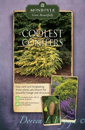 Conifers_Mechanicals