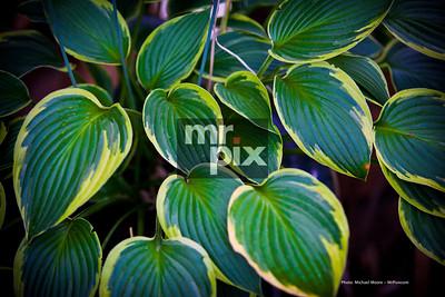 Environmental Photography