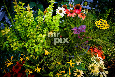 Plants & Flowers - Product Photography