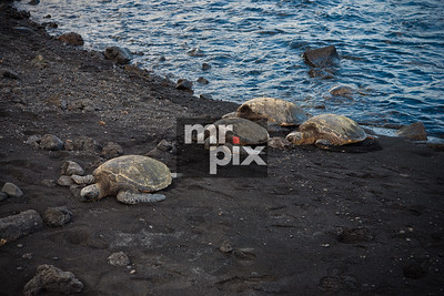 Environment & Landscapes - The Big Island