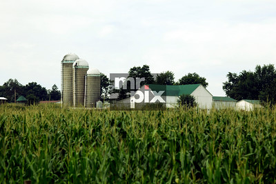 Ohio's cornfields and the Amish lifestyle