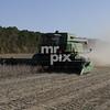 Weyerhaeuser Sawgrass Biofuels shoot