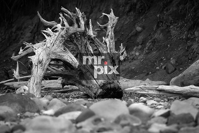 Driftwood along the shore of Lake Cle Elum, in Eastern Washington - Environment Photography